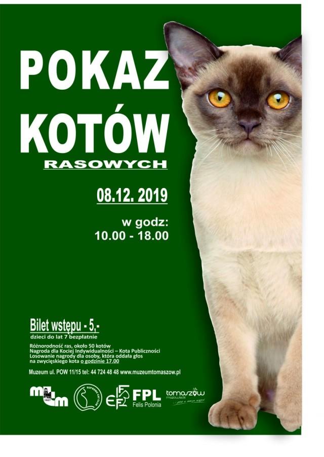 wystawa kotów 2019