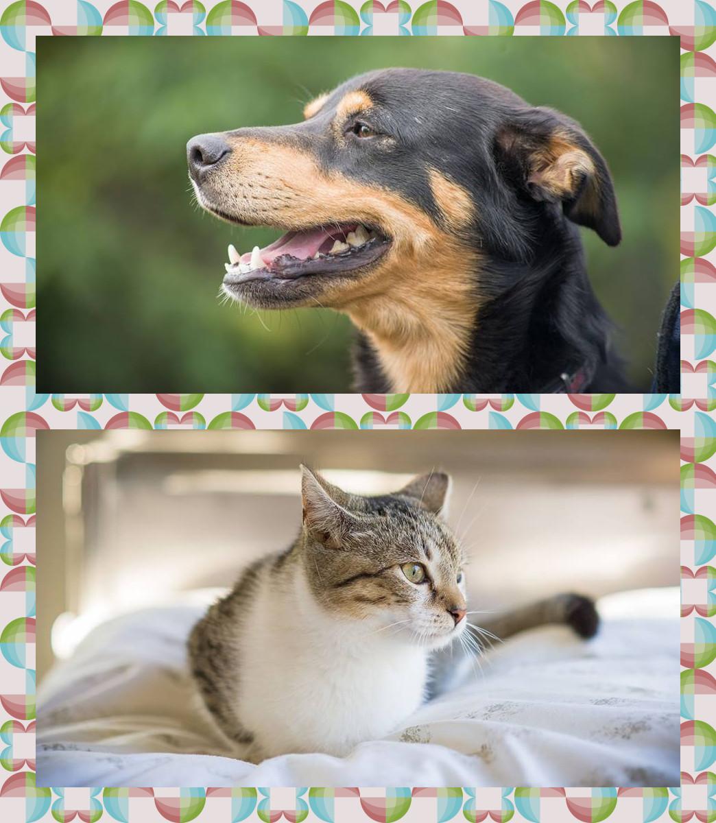sterylizacja psów i kotów