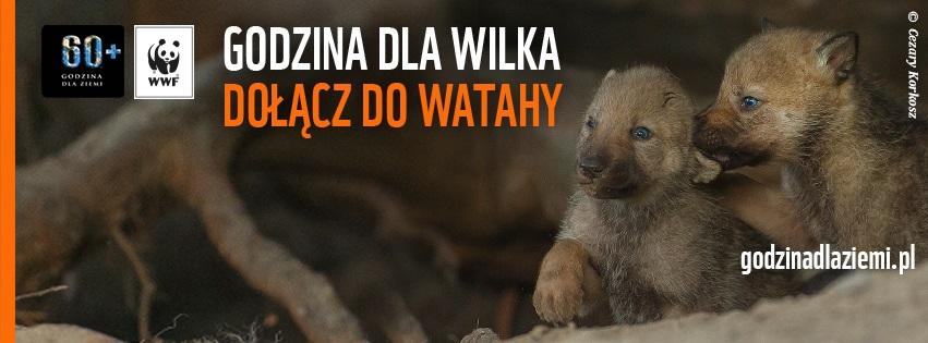 Zdjęcie wilków ilustrujące akcję/ www.godzinadlaziemi.pl