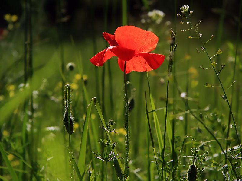 Dotacje dla ogrodów działkowych