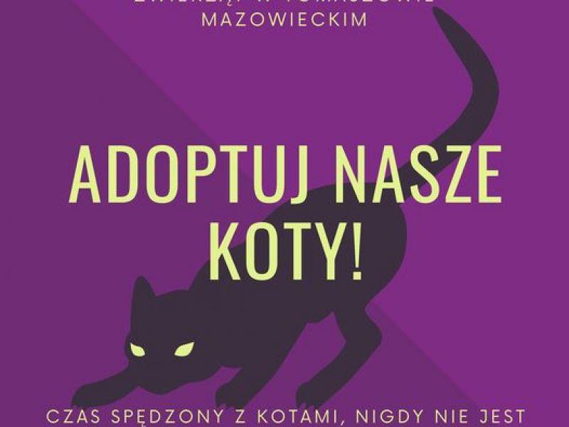 Na zdjęciu baner zachęcający do adopcji kotów z tomaszowskiego Schroniska. Na banerze grafika czarnego kota