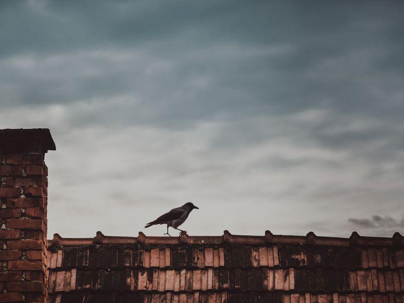 Na fotografii komin na budynku mieszkalnym. Obok komina, na dachu siedzi wrona.