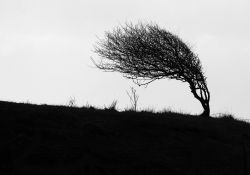 Uwaga, silny wiatr! Ostrzeżenie Biura Prognoz Meteorologicznych