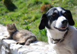 Bezpłatna sterylizacja suk i kotek. Można składać wnioski