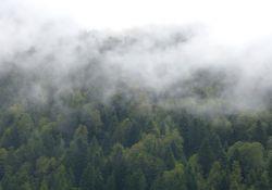 Uwaga, mgła!