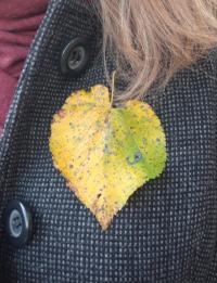 Masz serce do drzew? Weź udział w akcji muzeum