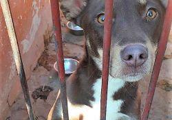 Kochasz zwierzęta? Zostań ich patronem – honorowym opiekunem