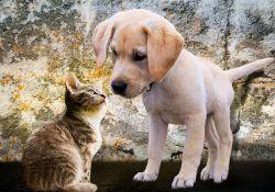 Bezpłatna sterylizacja suk i kotek