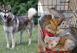 Porzucone kociaki i Nero szukają domu!