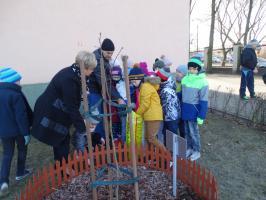Uczniowie SP 12 posadzili Dąb Henryka Sienkiewicza